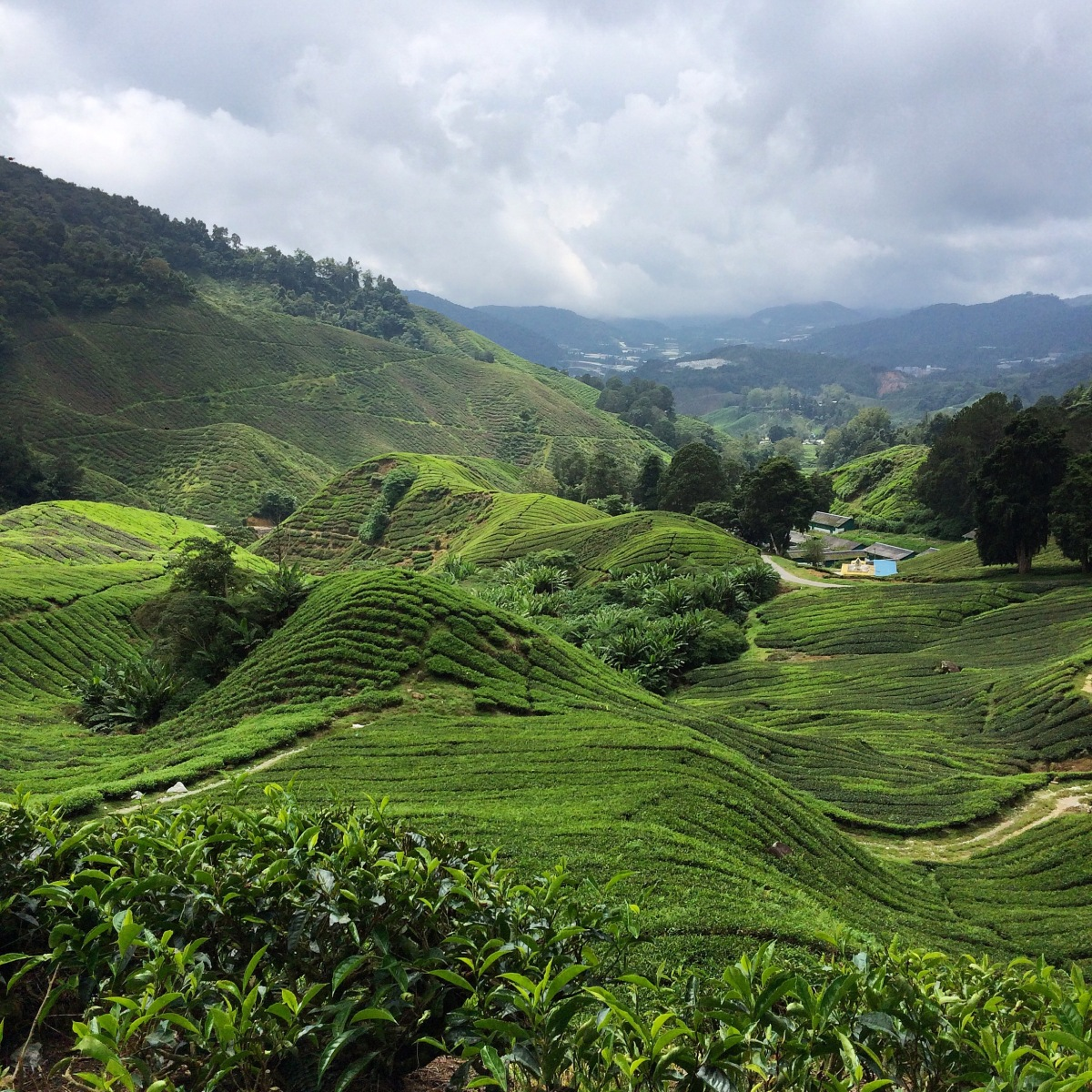Cooling Off in Cameron Highlands